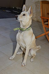 Cannan_Dog_Sitting